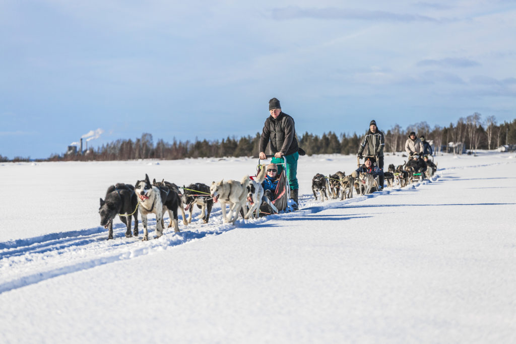 Dogsledding in Kalix, Swedish Lapland