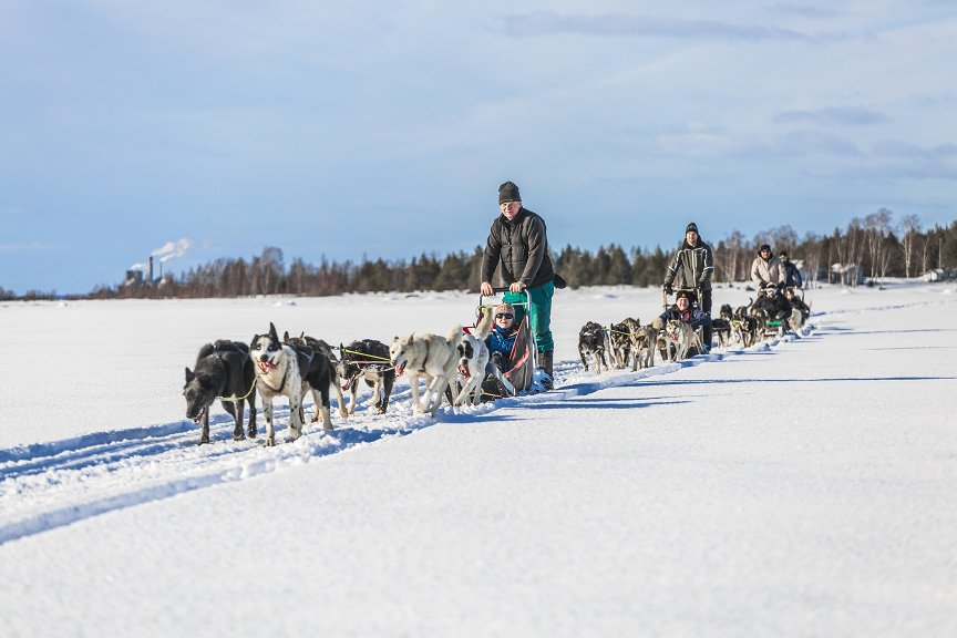 Dogsledding Tours in Kalix